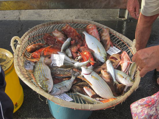Pescato del mare Ligustico