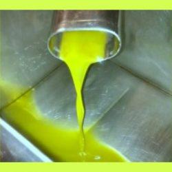 Olio nuovo da olive taggiasche 500 x 450