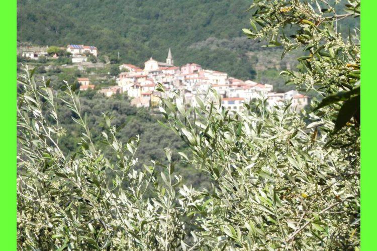 olio taggiasco o olio ligure, un paesaggio tipico dell'entroterra della liguria